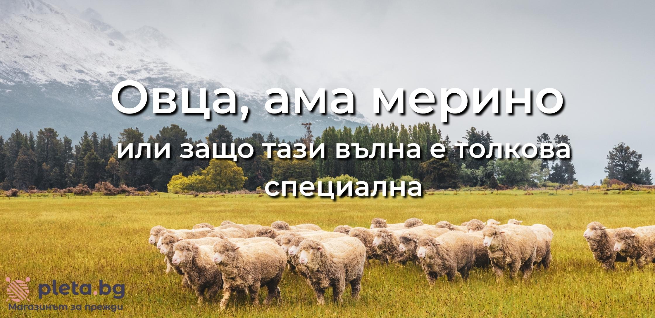 Овца, ама мерино или защо тази вълна е толкова специална